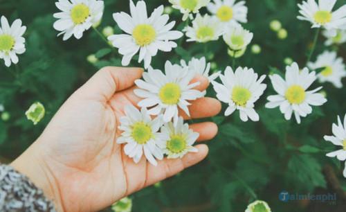 cap hay ve hoa 2