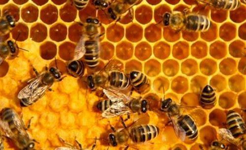 nam mo thay con ong nam mo thay ong dot to ong mat 2