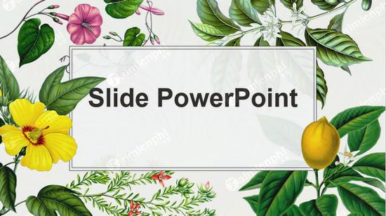 mau slide powerpoint bai giang dep 2