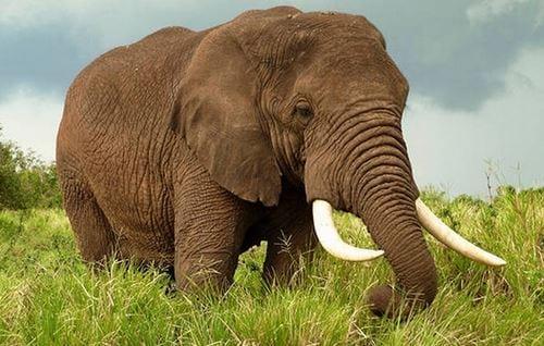 van mau ta con voi trong vuon bach thu lop 4 2